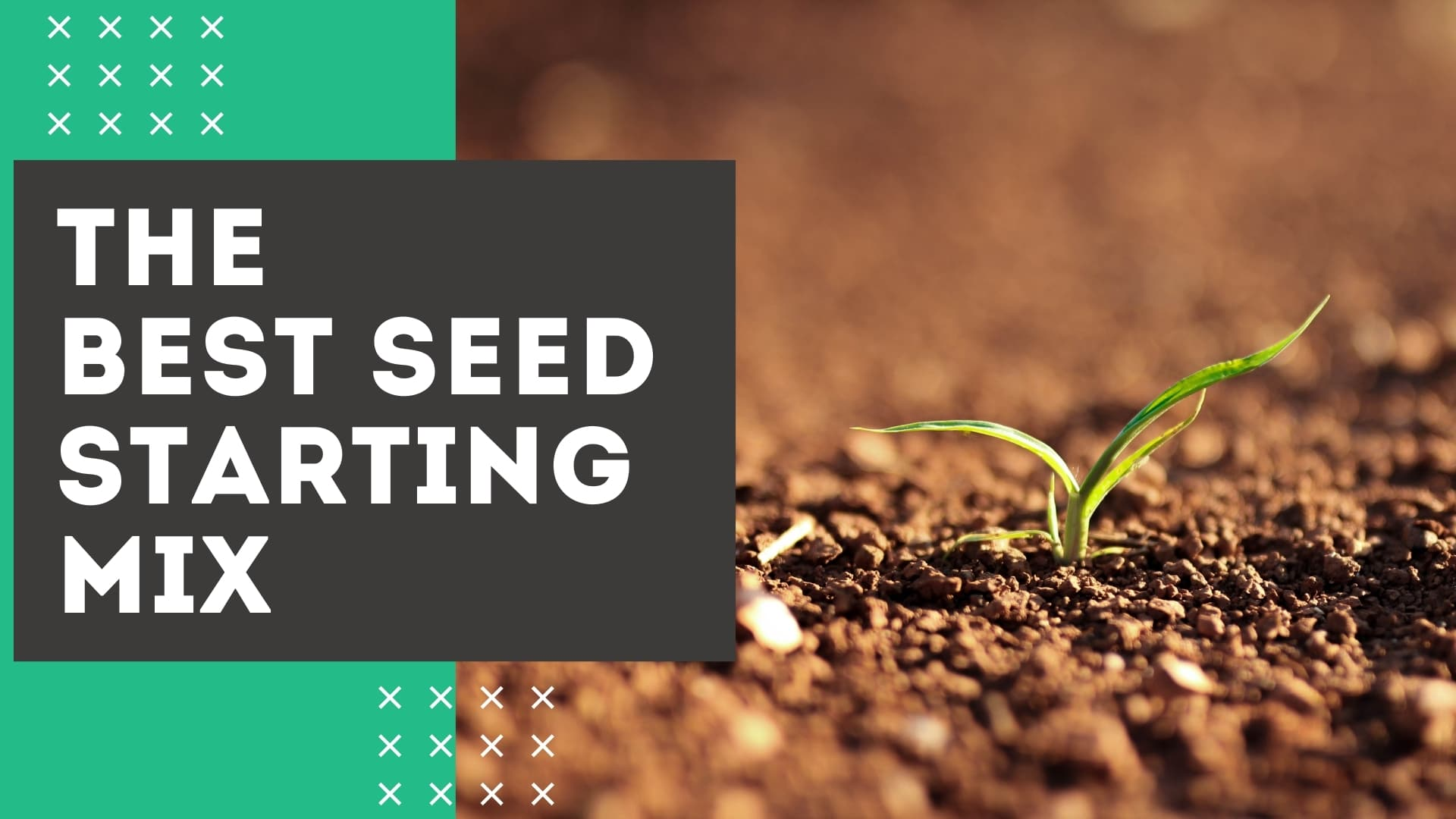 the best seed starting mixes