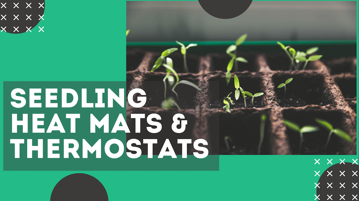 The Best Seedling Heat Mat & Thermostat