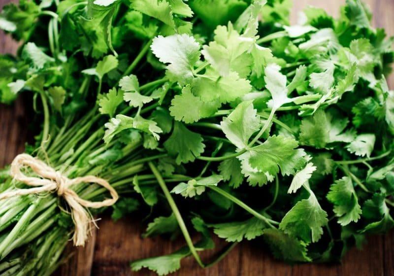 tied cilantro