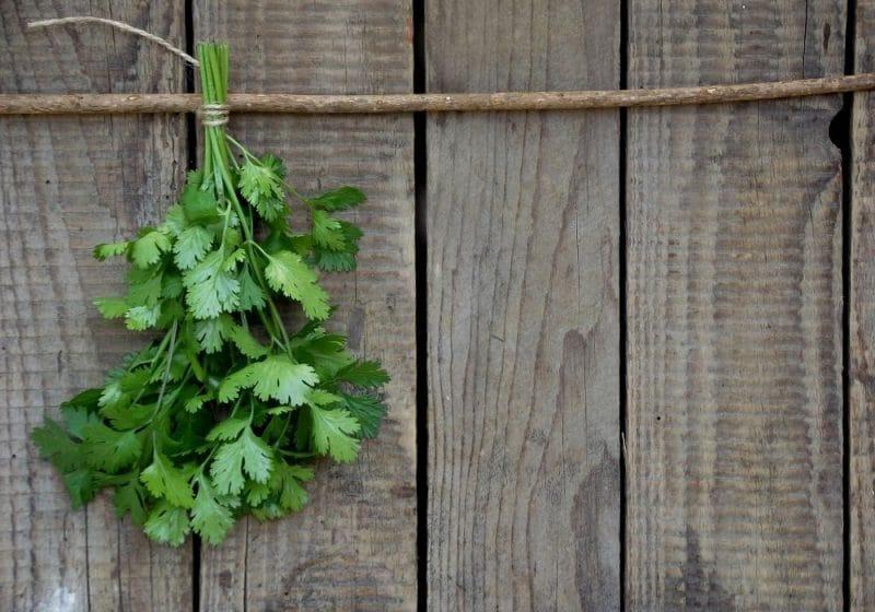how to air dry cilantro