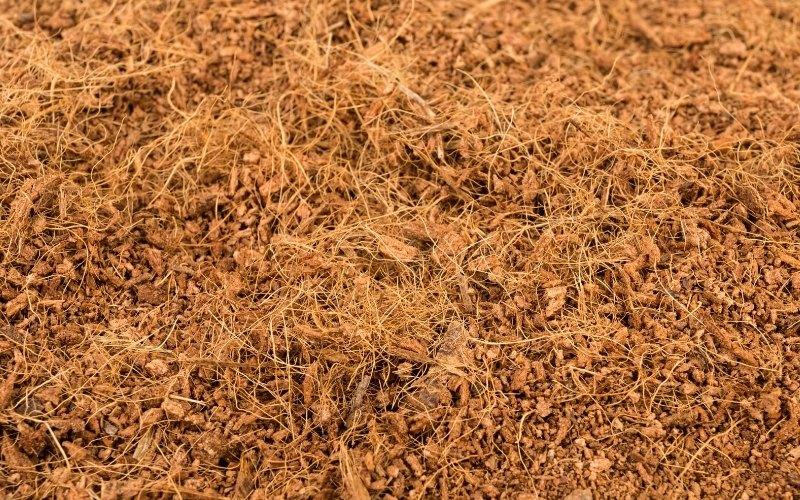 coconut coir as microgreens medium
