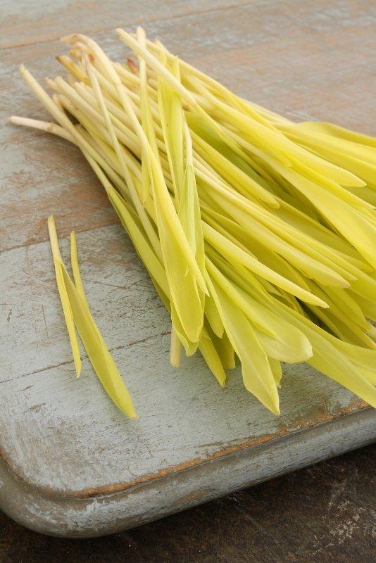 corn microgreens