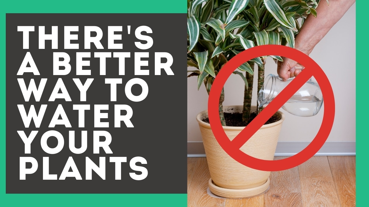 How to Bottom Water Plants [+ Why It Will Keep Them Alive]