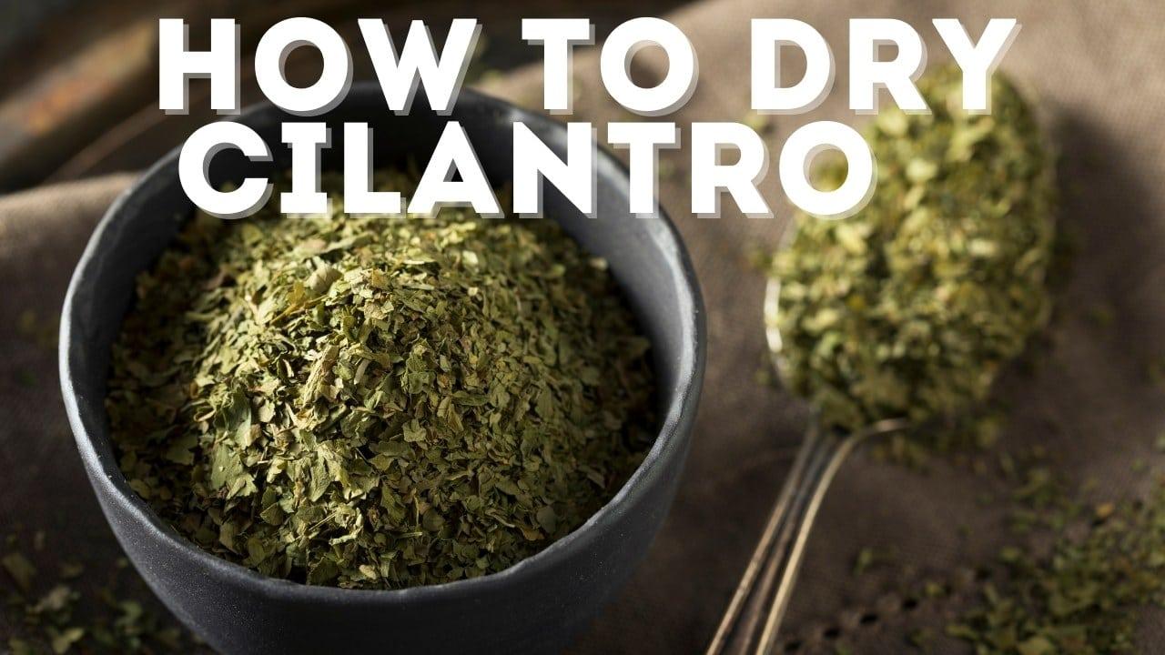 How to Dry Cilantro: 4 EASY Ways [& Storage Best Practices]