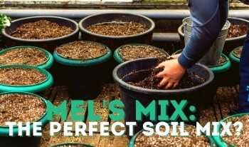 Mel's Mix: The Best Soil for Raised Beds?