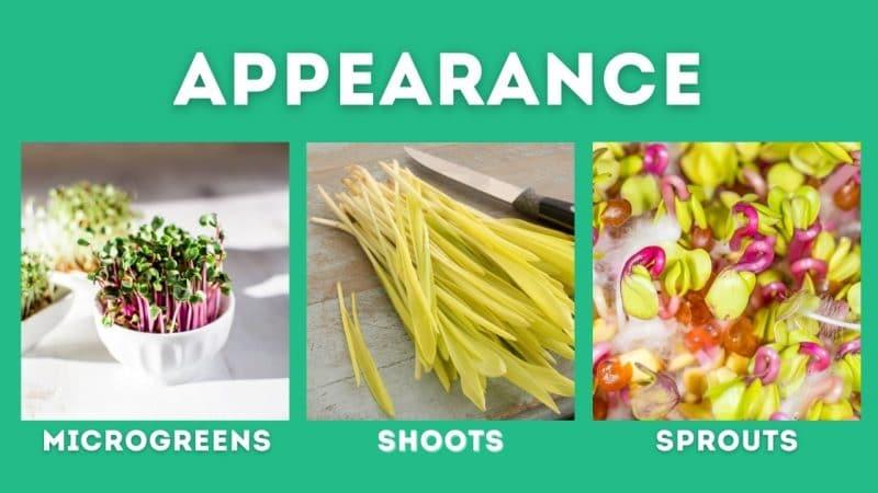 microgreen vs shoots vs sprouts