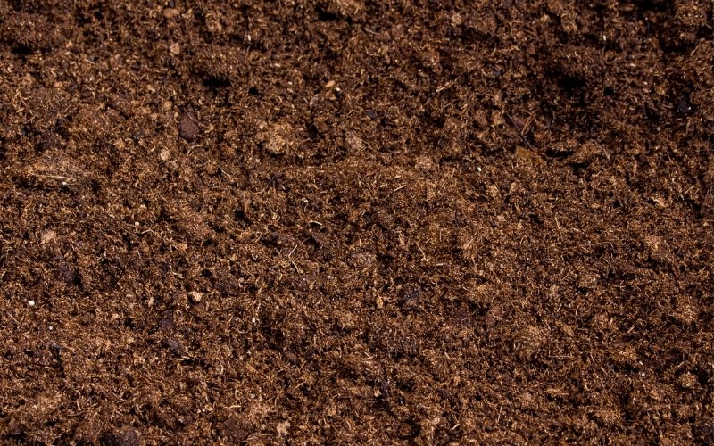 peat moss for microgreens