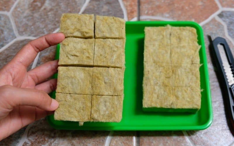 rockwool for microgreens