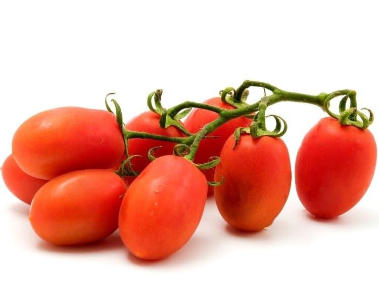 roma tomato vine