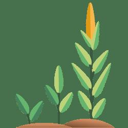 Seeds & Grain