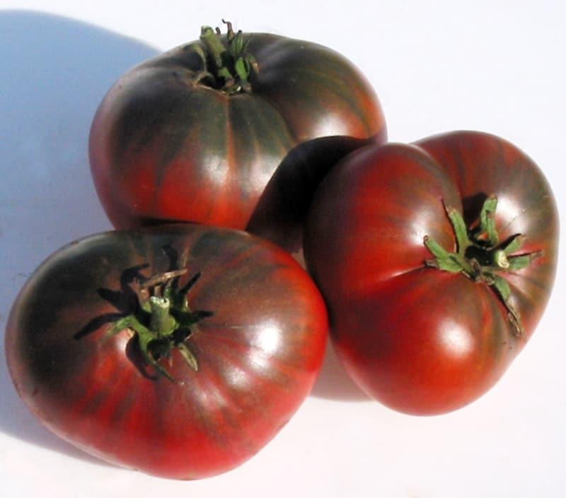 southern night tomato